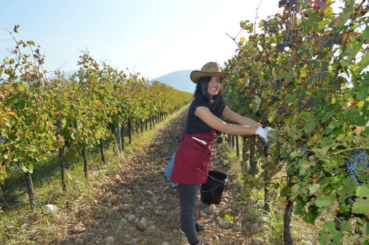 виноградники в Черногории