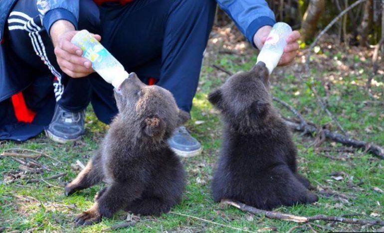 В Черногории открыт и работает приют, где можно увидеть диких животных и птиц