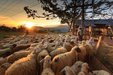 sheep-3023520_1280