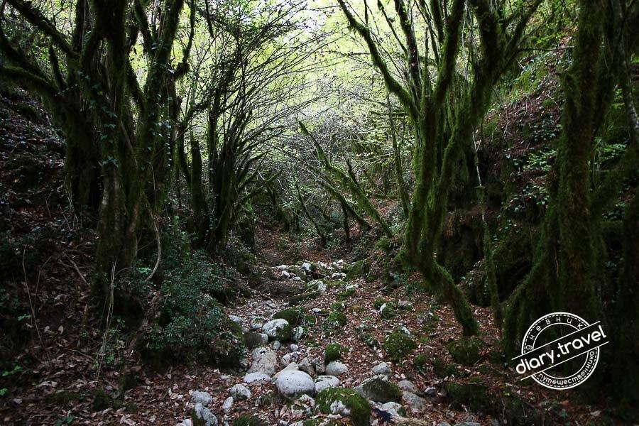 леса Черногории