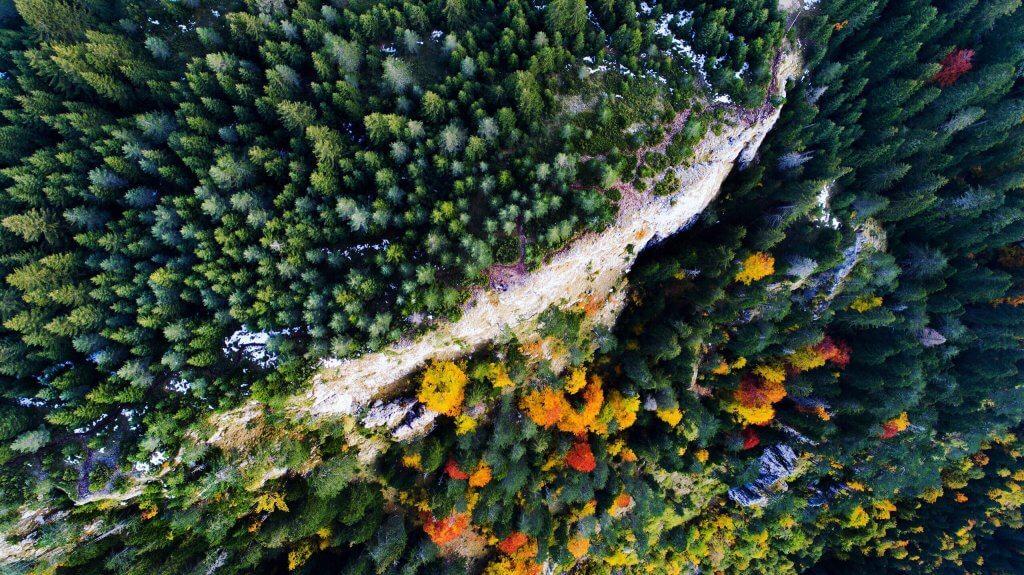 растительный мир Черногории