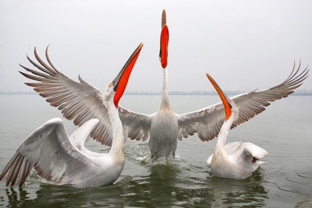 птицы Черногории