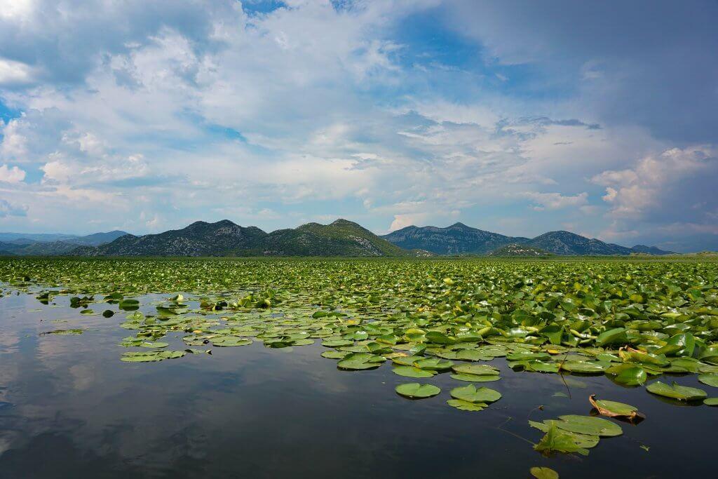 парк Скадарское озеро в Черногории