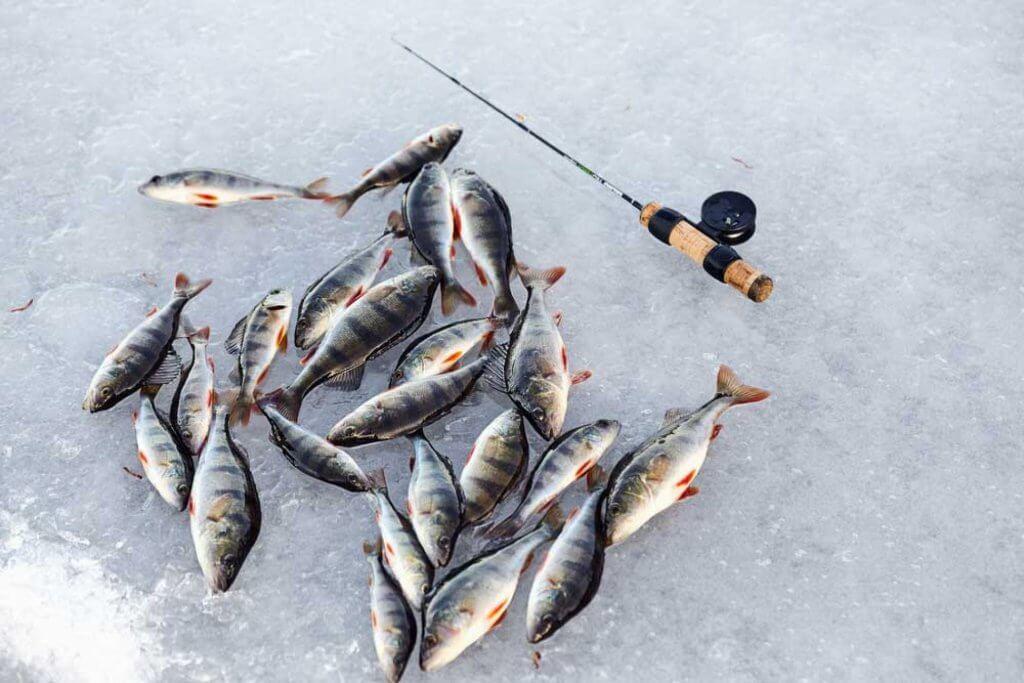 сезон зимней рыбалки в Черногории