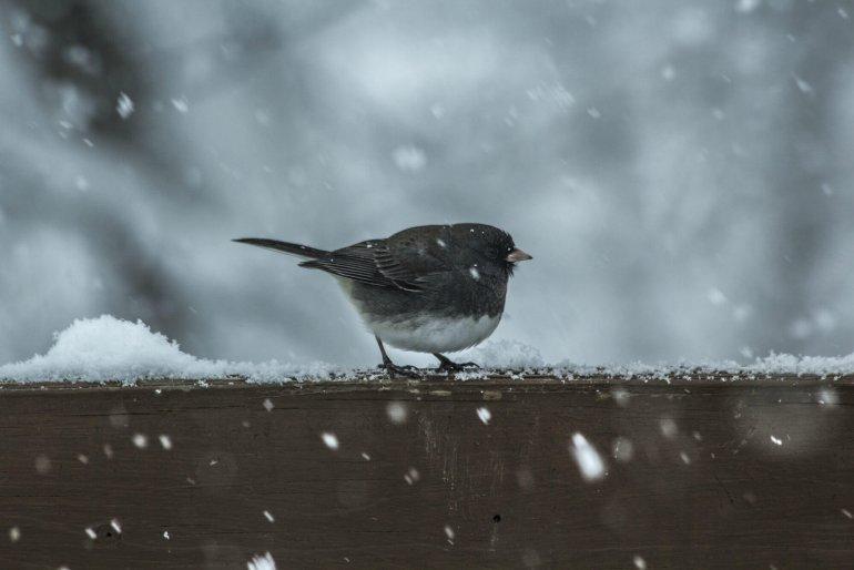Черногория в декабре - погода, отдых, чем заняться