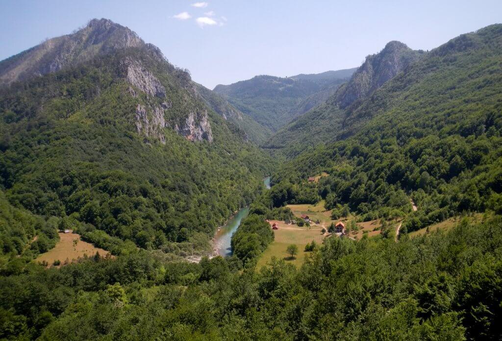 горные леса Черногории