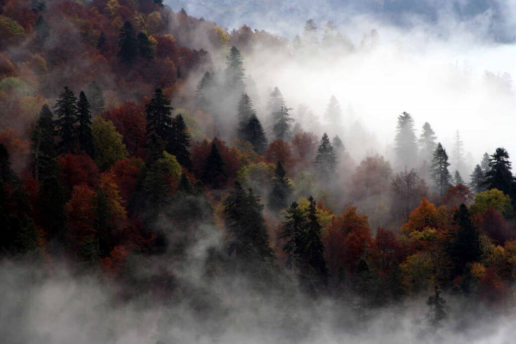 Биоградска гора Черногория