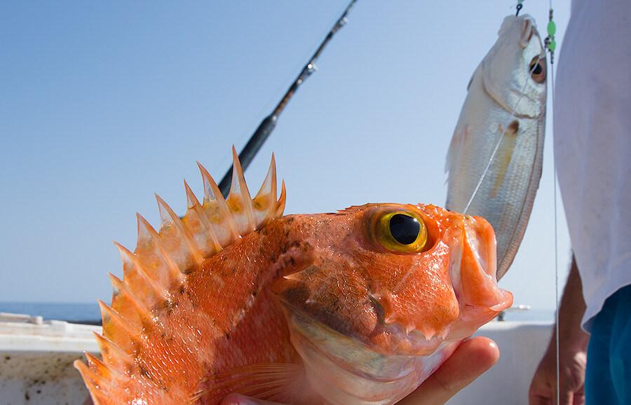экзотические рыбы Черногории