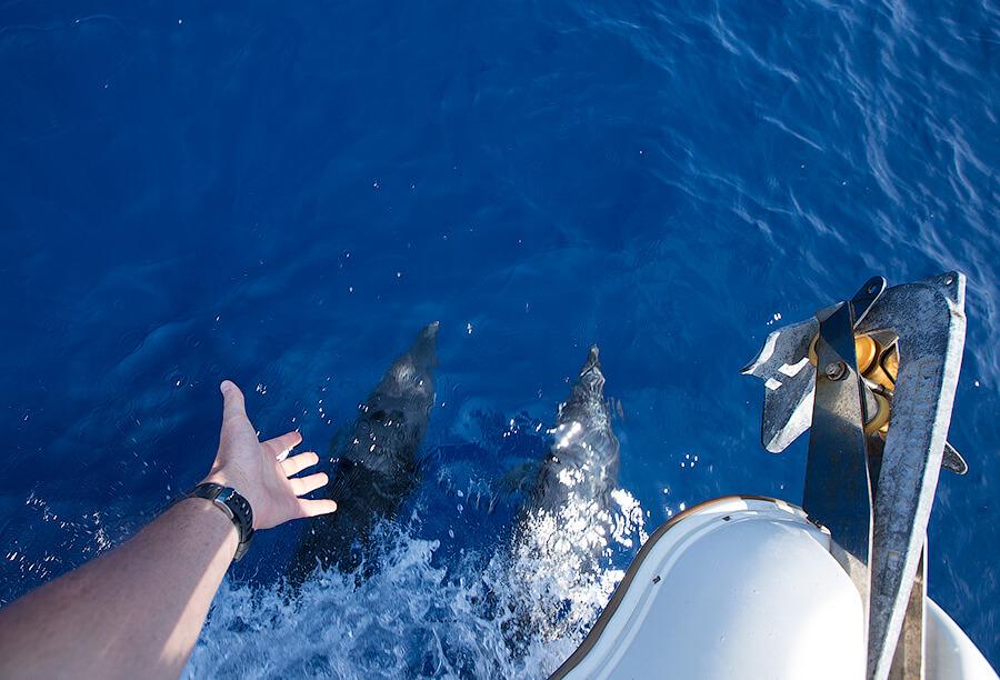 дельфин Черногория
