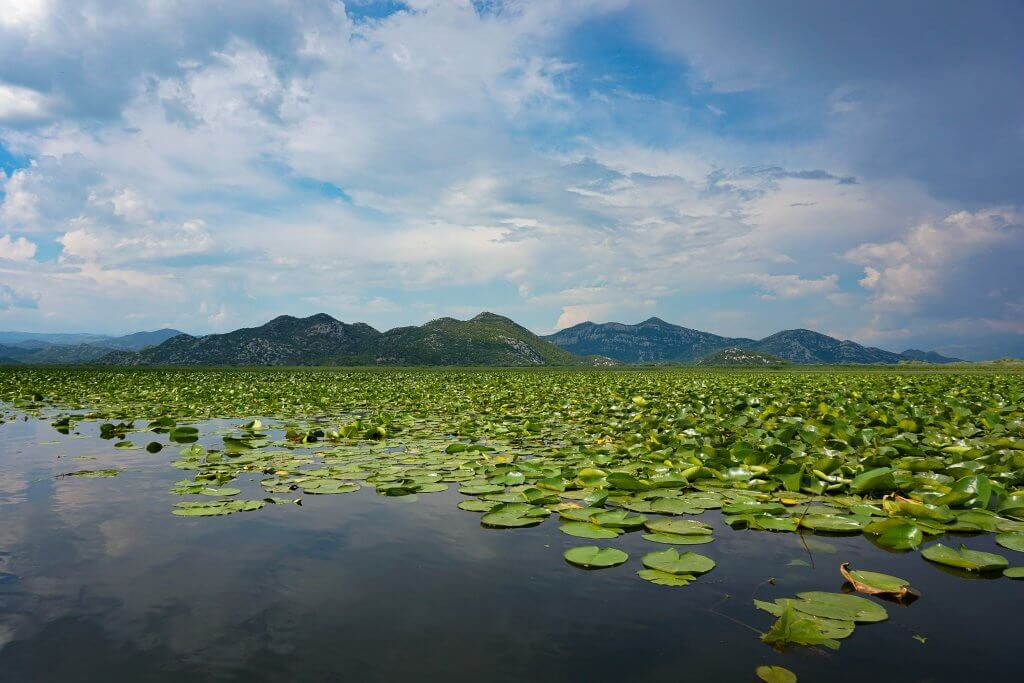 Скадарское озеро фото