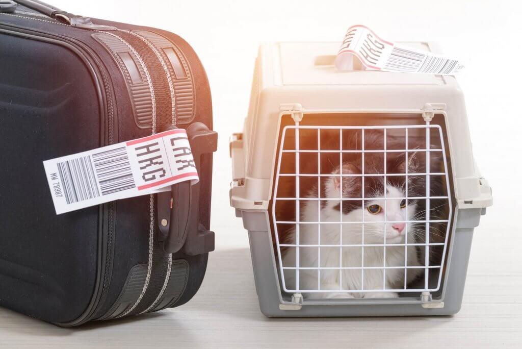 Особенности ветеринарного контроля