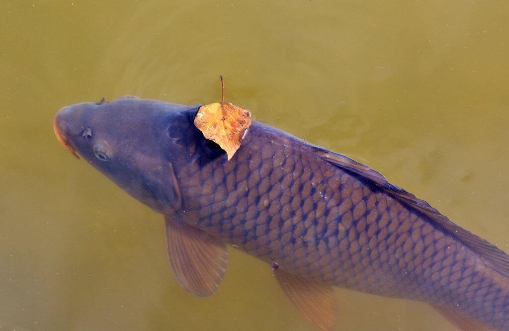 экосистема Шасского озера