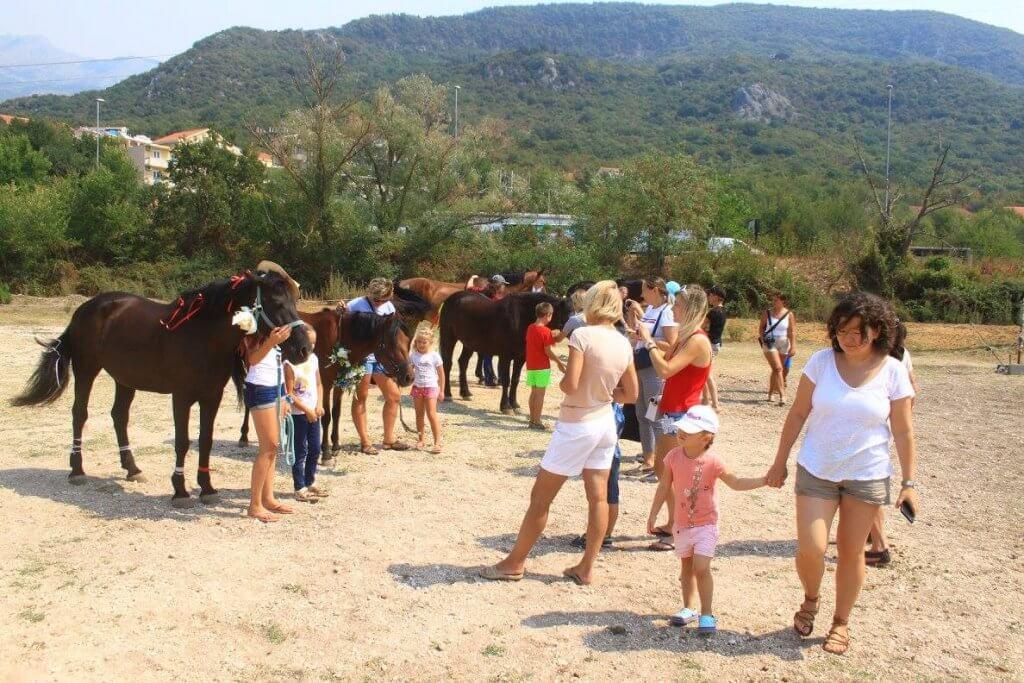 конный центр в Черногории